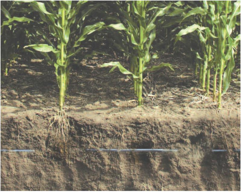 Beneficios del riego por goteo para el cultivo de maiz for Aspersores para riego de jardin