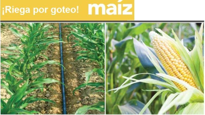 Las grandes ventajas del riego por goteo para el ma z - Sistemas de goteo ...