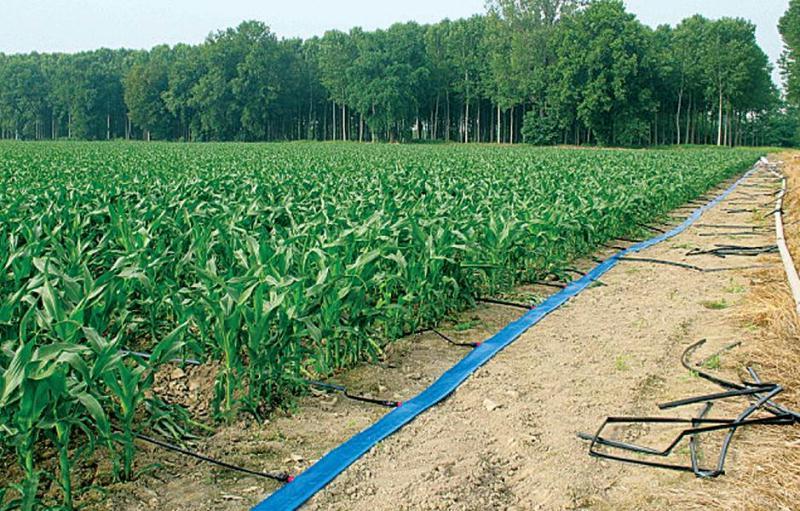 Instalacion de la cinta de riego laytflat ris iberia for Aspersores para riego de jardin