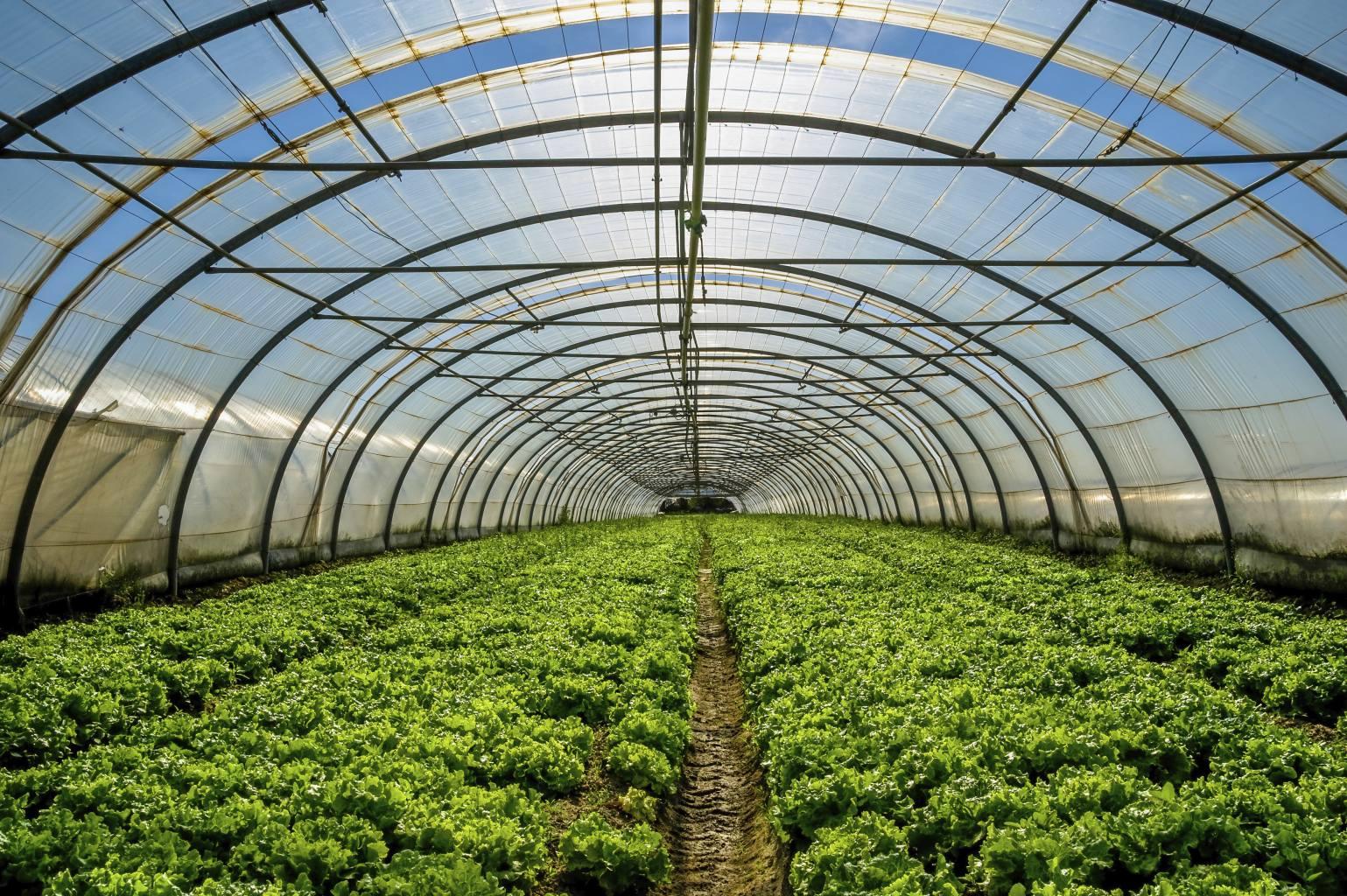 Beneficios de automatizar el sistema de riego de for Vivero e invernadero